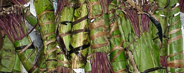 Khat stimulant banned as illegal class C drug in the UK
